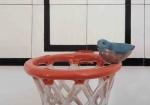 glazed ceramic,80x60x36cm,2012
